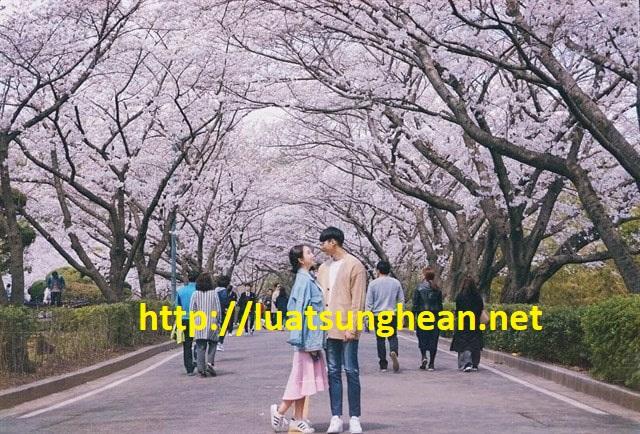 Thủ tục xin visa Hàn Quốc 5 năm